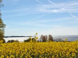 Rapsfelder und Ostsee