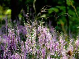 Vielfältige Pflanzenwelt